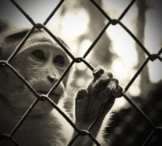 Call for a Nationwide Ban on Keeping Monkeys as Pets
