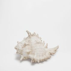 Image 1 of the product Shell decorative figure