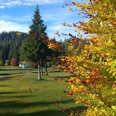 Autunno alle Regole! #autunno #foliage #rossofuoco #montagna #falchettolovers #valdinon #trentinodavivere #colors #blusky #vacanza