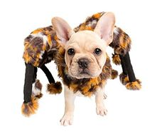 """Nothing screams """"Sleep with one eye open!"""" like this scary dog spider costume! Pet Krewe's Scary Spider Costume for Dogs is not only loads of fun, but the quality will have you howling with joy. There's nothing like doubling the number of your dog's legs for a diabolical... more details available at https://perfect-gifts.bestselleroutlets.com/gifts-for-pets/for-cats/product-review-for-spider-dog-costume-cat-costume-pet-costumes-by-pet-krewe/"""