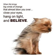 ❤️Hit That Share Button To Motivate Your Friends & Family❤️ ▬▬▬▬▬▬▬▬▬▬▬▬▬▬▬▬▬▬▬ #MondayMotivation #MotivationMonday #quotes #quoteoftheday #motivationalquotes #PuppyLove #PawPrints #Happiness #Yorkie #YorkshireTerrier #HangOnTight #LancasterPuppies www.LancasterPuppies.com Wind Of Change, Funny Inspirational Quotes, Funny Quotes, Dog Quotes, Motivational Quotes, Animal Quotes, Life Quotes, Hilarious Sayings, Hilarious Jokes