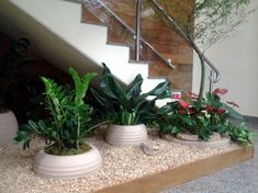 jardim embaixo da escada - Pesquisa Google Vertical Garden Plants, Succulents Garden, Indoor Garden, Indoor Plants, Home And Garden, Indoor Water Features, Font Design, Recycled Garden, House Plants Decor