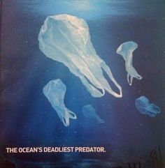 The ocean's deadliest predator: plastic bags. Many large marine animals mistak. - My Favorites Bag For Women National Geographic, Earth 3, Planet Earth, Sketch Manga, Save Our Earth, Save Our Oceans, Plastic Pollution, Ocean Pollution, Marine Biology