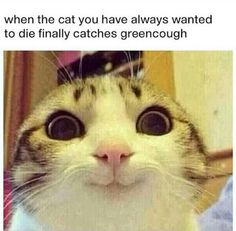 When the cat you have always wanted to die finally catches greencough. | Too true!!