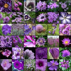 Hottest Screen Purple Flowers garden Suggestions Purple flowers tend to be elegant flowers. They're deluxe and pretty, tasteful as well as boheme. Purple Plants, Purple Garden, Flowers Garden, Types Of Purple Flowers, Purple Perennials, Lilac Flowers, Amazing Flowers, My Flower, Beautiful Flowers