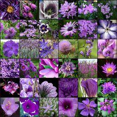 Purple flowers #purple #flowers