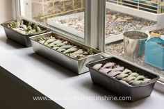 How to propagate succulents from leaves