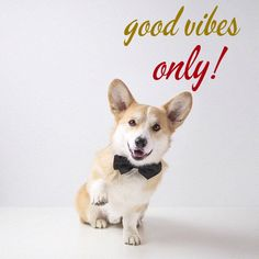 good vibes only! cute dog and positive quote! click on this image to see the biggest selection of positive inspirational quotes that will make your day!