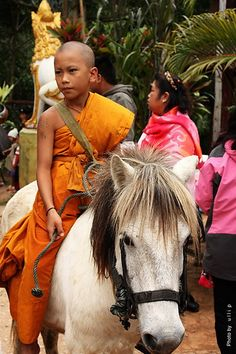 Novice from the Golden Horse Temple . Thailand