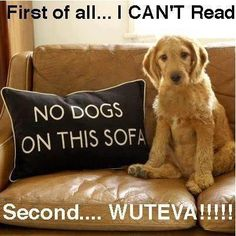 Funny Dog Photos with quotes. I can't read.