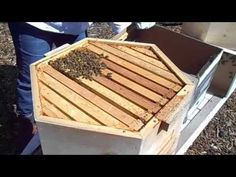 Hex Hive® - Installing A New Swarm - YouTube