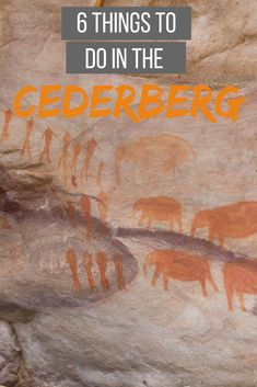 Best things to do in the Cederbeg, South Africa. Check out amazing hikes, bushman paintings and more! Stuff To Do, Things To Do, Travel Bugs, West Coast, South Africa, Invitation, Paintings, Amazing, Check