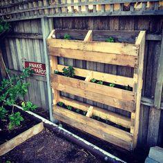 Pallet garden / wall garden