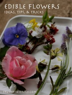 Edible Flowers // salads, syrups, oils, butters, and more / Wholesome Foodie <3