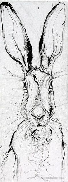 35 Best Ideas For Drawing Animals Rabbit Illustrations Animal Paintings, Animal Drawings, Art Drawings, Drawing Animals, Easter Drawings, Hare Illustration, Illustrations, Line Drawing, Painting & Drawing