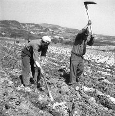 Country Farm, Country Life, Old Photos, Vintage Photos, Agriculture, Farming, Black And White People, Champs, Vintage Gardening
