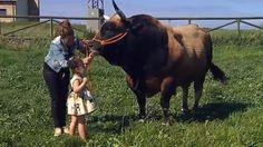 Toro ayuda a niña con sindrome rett a conectar con el mundo >>