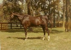 Wing Commander at approximately 22 years old, shortly before he passed away. Photo taken at Dodge Stables by Danny Jenner.