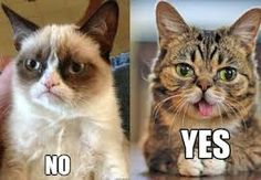 Image result for lil bub the cat