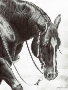 The Warmup Pen, new horse head drawings by western artist Annette Randall. One of my favorite horse show events is reining. The grace and strength of these highly trained horses is amazing. Horse Head Drawing, Horse Pencil Drawing, Horse Drawings, Animal Drawings, Drawing Art, Pencil Art, Pencil Drawings, Horse Artwork, Horse Paintings