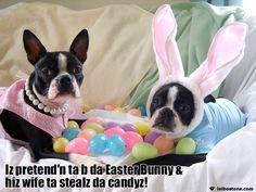 Easter Boston!