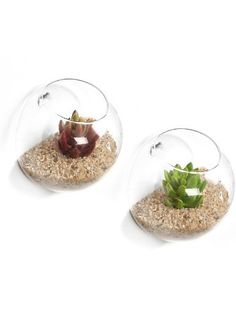Set of 2 Wall Mounted Clear Glass Terrariums / Air Plant Globes / Hanging Candle Display Bowl Jars ❤ MyGift