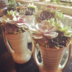 Custom order for centerpieces - salvage succulents