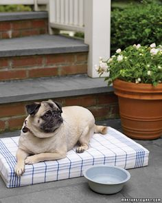 A fun #DIY for pet beds.