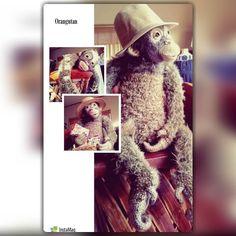 #あみぐるみ #あみぐるみ作家 #リュミエナ #かぎ針編み #編み物 #ニット #オランウータン #森の人 #毛糸 #オラン藤田 #amigurumi #crochet #knitting #instaamigurumi #instacrochet #animal #orangutan #hook #pongo #yarn #lumiena #crochetdoll #crochetanimal #OrangFujita by lumiena_amigurumi