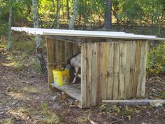 I made a goat house.  I actually just ordered a book on building things with pallets.  It's free, readily available wood.  You can't beat that with a stick!  I remember seeing a video on YouTube about a lady that made a fence for her pigs using only pallets.