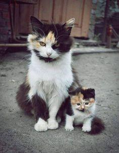 Sweet look. ♥ #cats #pets