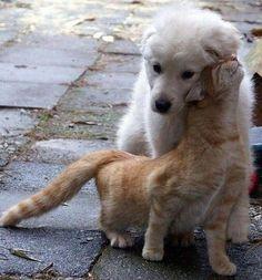 Finding Neverland | funnywildlife: I love you doggy!!