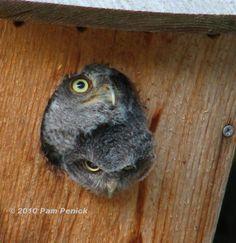 Owlets!!!!!