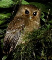 Image result for owlet