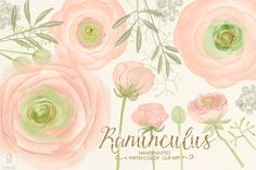 Watercolor ranunculus, blush pink by GrafikBoutique on Creative Market