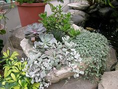 Gardener's Supply -- In a few hours, you can create a planter made with hypertufa, a material that has an ancient, hand-hewn quality. Hypertufa containers are perfect for alpines, succulents, mosses and even tiny evergreens.