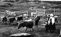 Svart-kvit foto frå Gamle Aal 2 Black White Photos, Black And White, Old Photos, Norway, Writers, Books, Animals, Collection, Culture