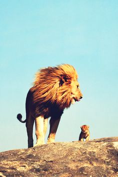 """""""Look, Simba. Everything the light touches is our kingdom.""""  """"Wow.""""  """"A king's time as ruler rises and falls like the sun. One day, the sun will set on my time here and will rise with you as the new king."""""""