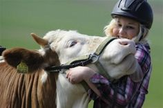 German Girl Trains Cow as a Show Horse