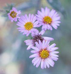 Autumn flowers by Elaine S on 500px