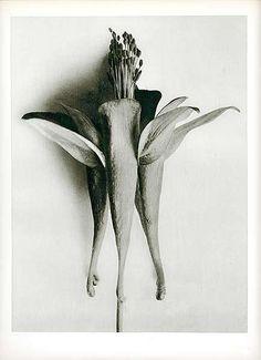 Karl Blossfeldt – was a German photographer, sculptor, teacher and artist: I appreciate his photographs because they are more earnest and less glossy than Edward Weston's. Karl Blossfeldt, Fine Art Photo, Photo Art, Milwaukee Art Museum, Haitian Art, Dark Flowers, Unusual Flowers, In Natura, Natural Forms