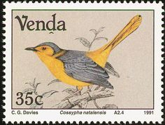 Red-capped Robin-Chat stamps - mainly images - gallery format