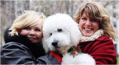 Merry Christmas From Smeraglia | Teddybear Goldendoodles