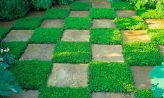 A mat of creeping thyme will thrive in less busy areas or chamomile too