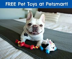 FREE Pet Toys at Petsmart