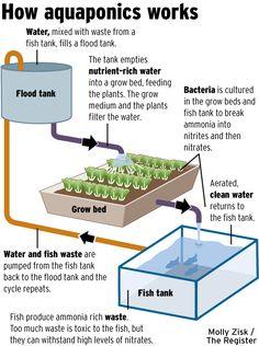 How Aquaponics works, in a nutshell. #SelfSufficiency #BackyardAquaponics
