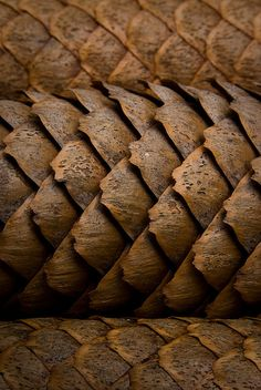 Brown Pine Cone Texture by JustABigGeek (Look like pangolin scales ~ M.A)