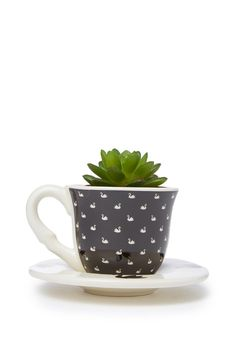 Bring some cuteness to your space with these dainty tea cup planters! <br> Each includes a fake plant (which is super hard to kill!) so you don't have to worry about watering it. <br> Dimensions: 12cm H x 8cm W. Tea cup made from ceramic, plant made from plastic. <br/>