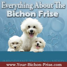 Bichon Frise Owner - Where it's all about the Bichons!