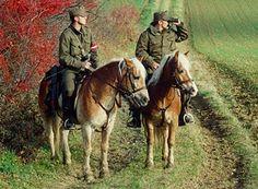 Cheval Haflinger, Haflinger Horse, Equestrian, Camel, Military, Cosplay, Austria, War Horses, Animals